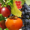 Unngå smitte fra bær og grønt