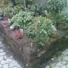 Ugress i hage og på vei – effektiv fjerning og forebygging