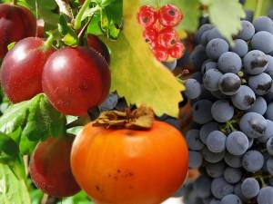 bar-smitte-frukt-gronnsaker