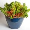 Plant i krukker effektivt