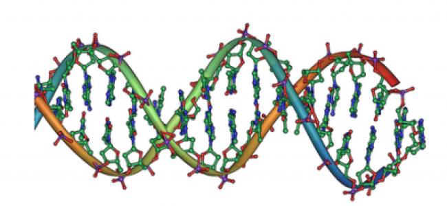 DNA – gener og arvemateriale
