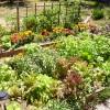 Hagetips: Grønnsaker skal gro i lys og sol