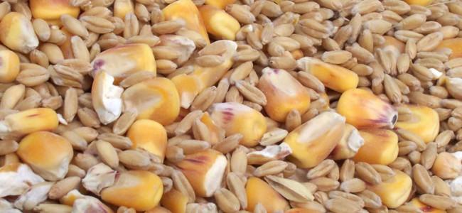 Karbohydrater – trenger vi dem egentlig?