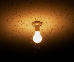 Viktig om lyspærer og energiforbruk