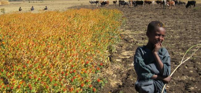 Økologi i Afrika kan være med på å sikre framtidens matvarer