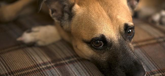 Menneskets beste venn hunden