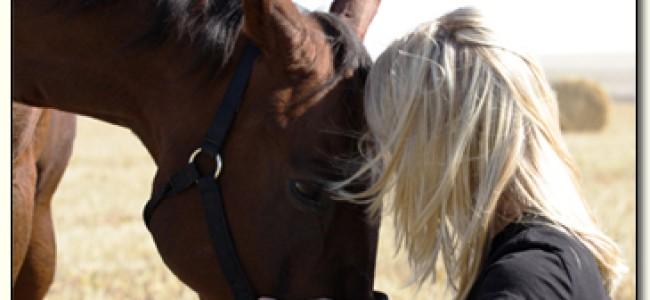 Hva koster det å ha en hest?