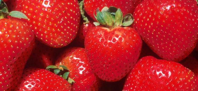 Hva er jordbær i tunnel?