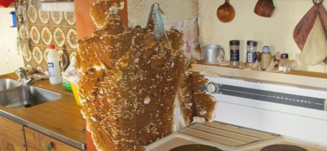 Eksplosjon av hussopp