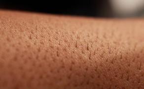 Litt fakta om huden