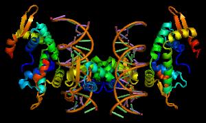 Eksempel på protein.