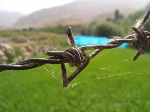 Barbed_Wire_1