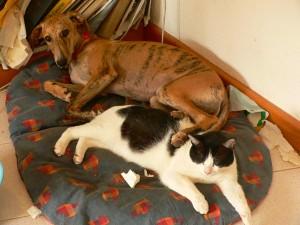 helse-kjaledyr-hund-katt