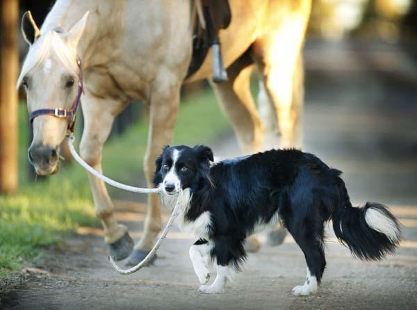 hest-hund-2