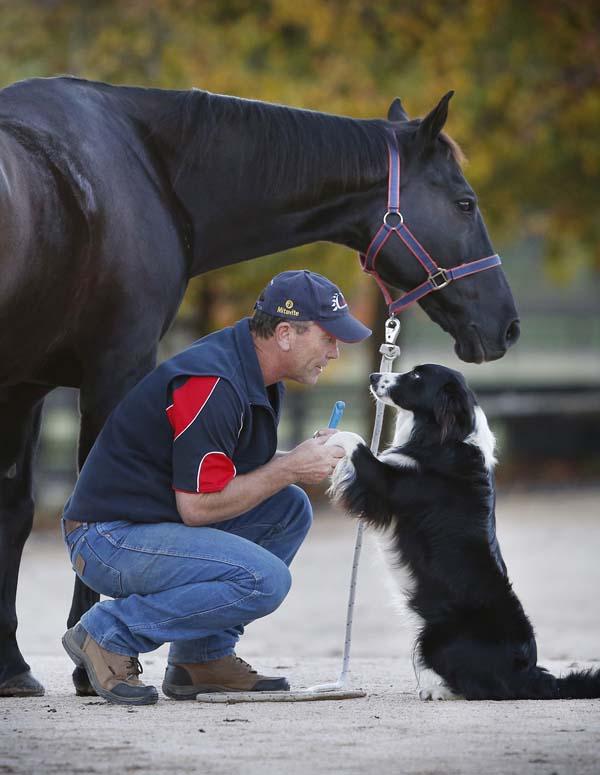 hest-hund-3