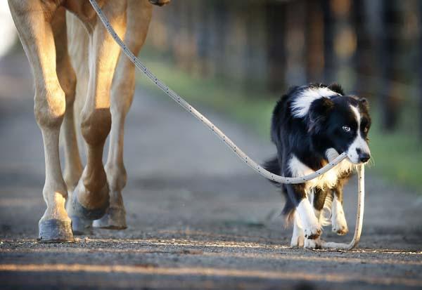 hest-hund-4