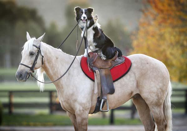 hest-hund