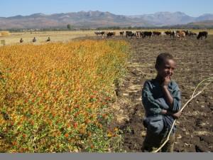 okologisk-landbruk-afrika