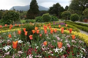 planter-hagen-hvordan-varlok-staude