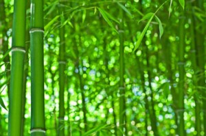 bambus-myk-klar
