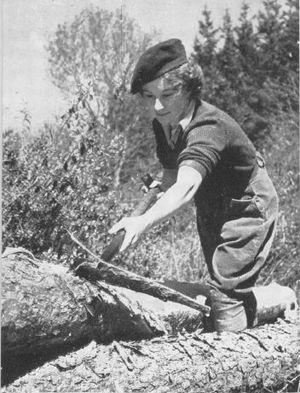 Tømmermenn for kvinner heter tømmerkvinner, her et eksemplar av arten i full jobb inne i hodet ditt