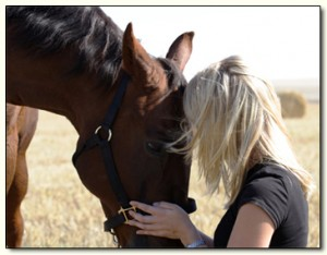hest-koster