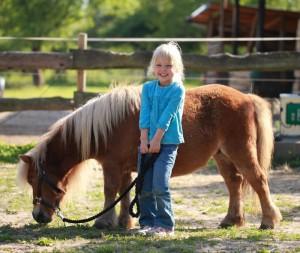 hest-pris